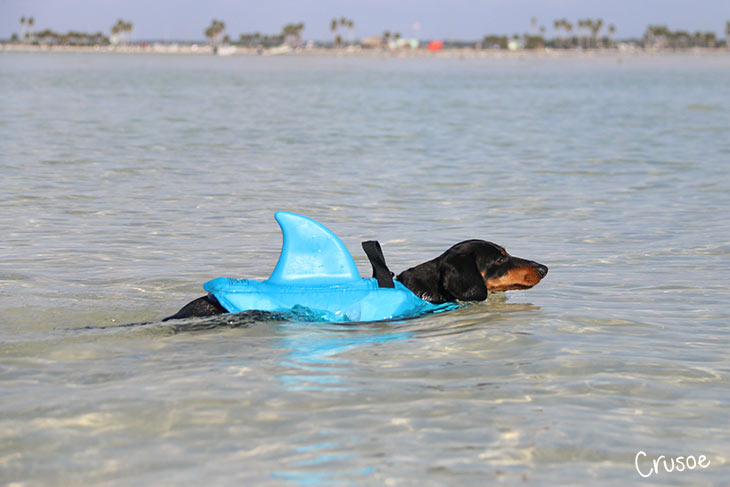 shark fin life jacket for dog