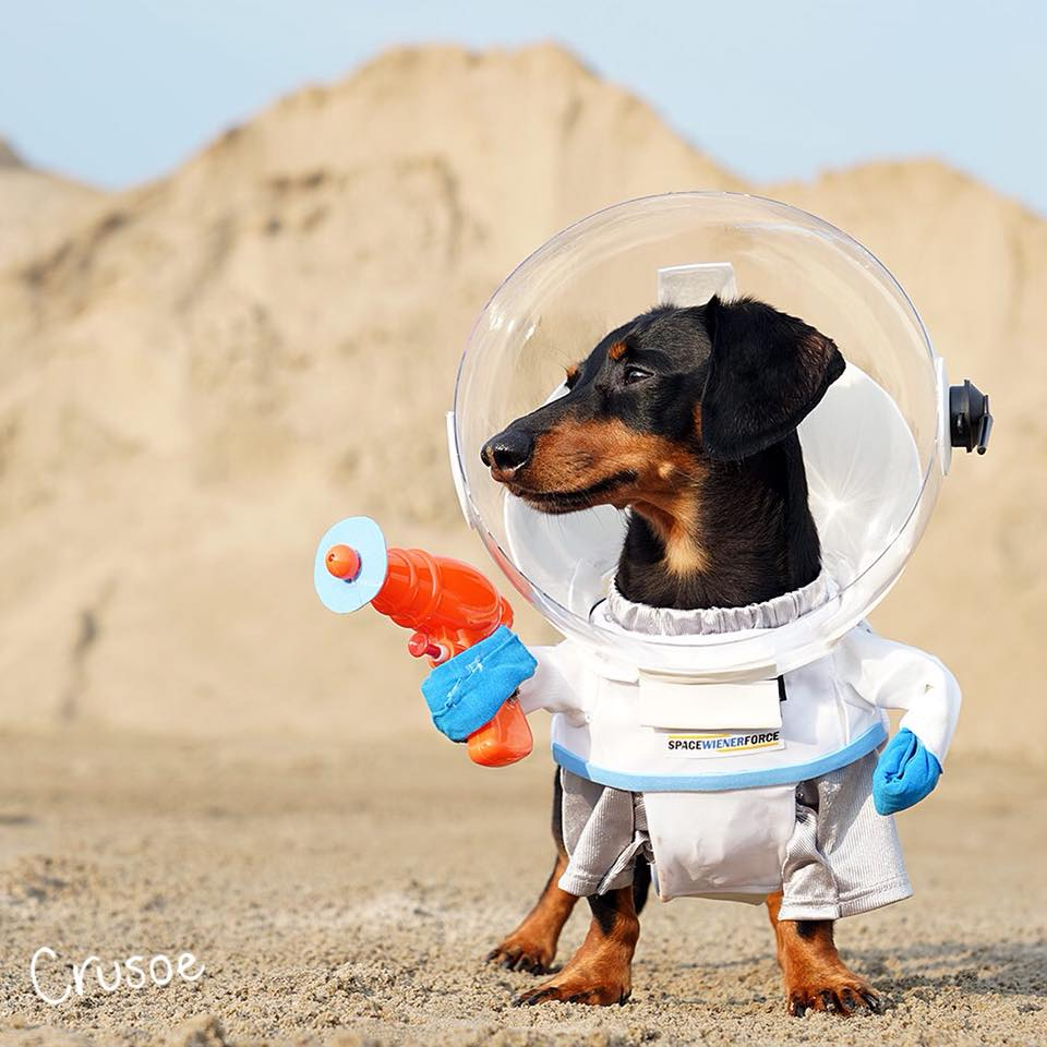 Best astronaut dog costume