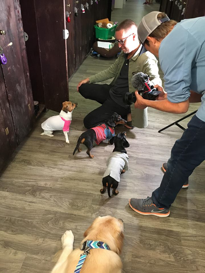 filming dogs actors movie