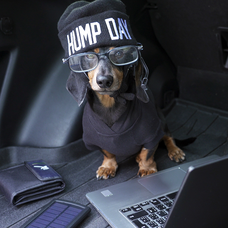 oakley dachshund hump day