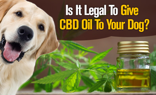 Is it legal to give your dog CBD Oil?