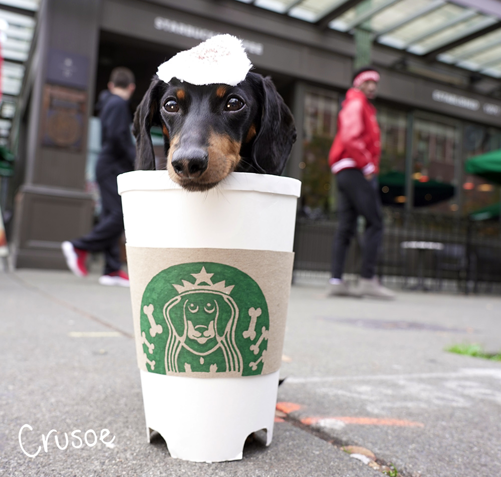 puppacino dog