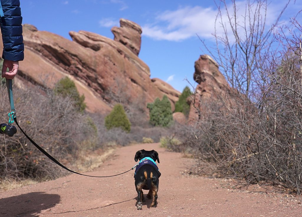 crusoe dachshund hiking red rock colorado