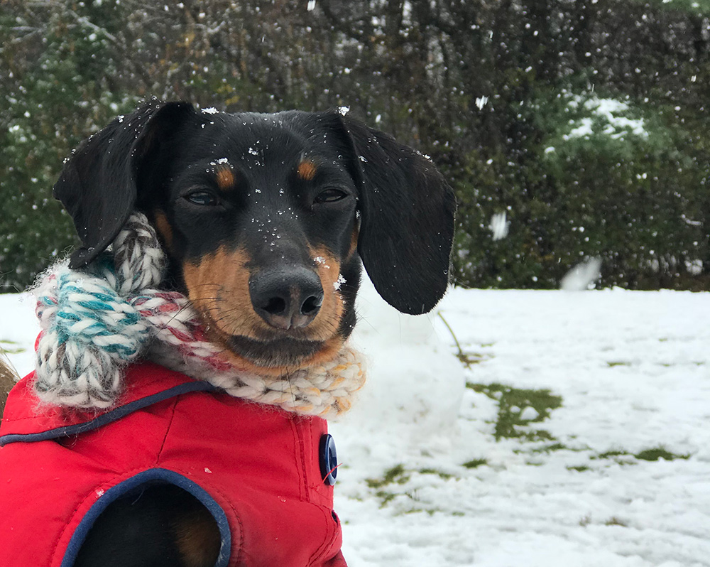 funny cute dog in snow
