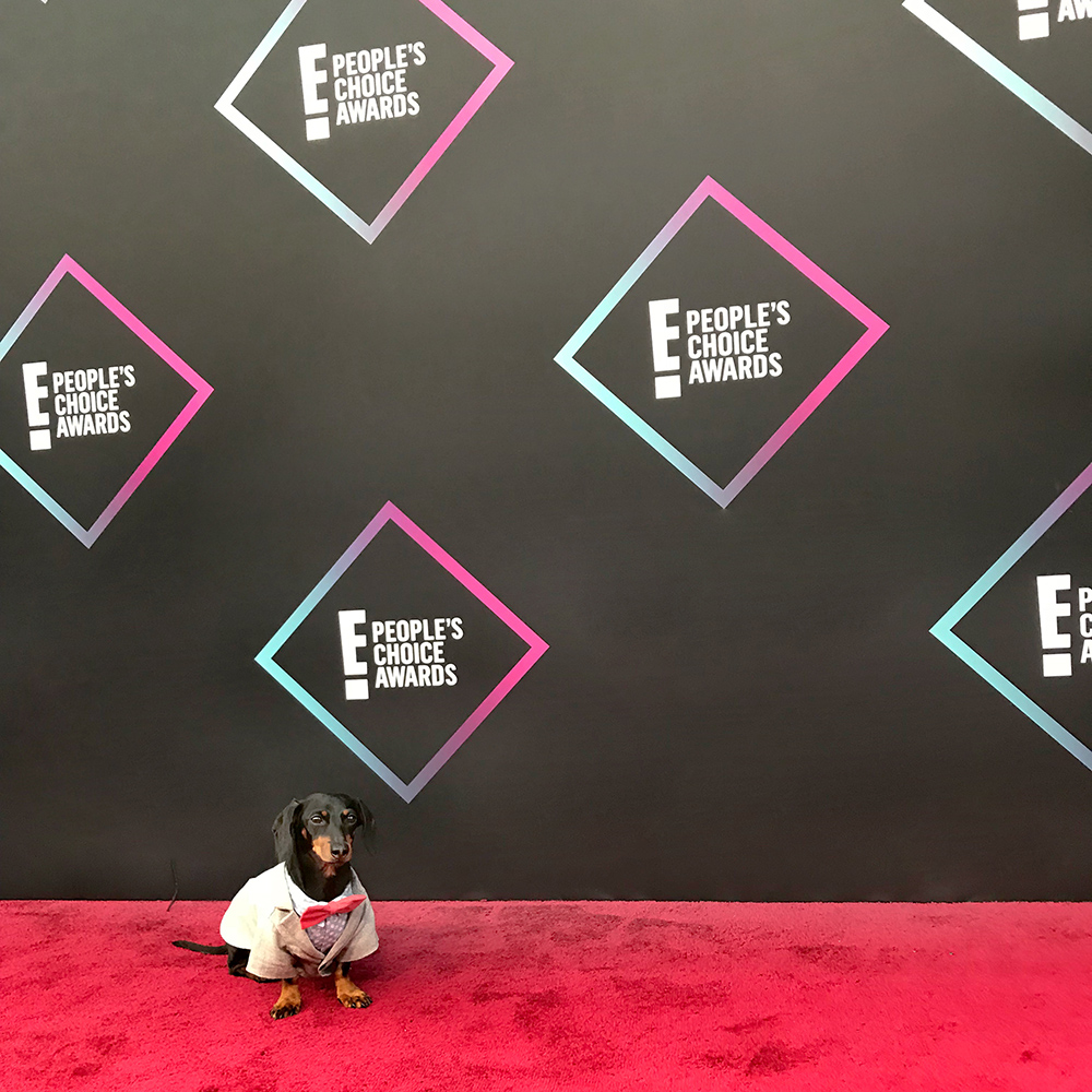 On the red carpet!