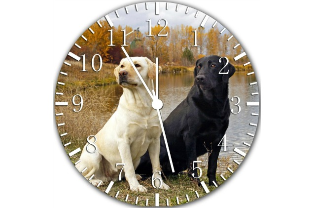 A frameless clock is a great piece of labrador retriever decor