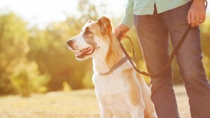 tips to safely socialize your adult rescue dog