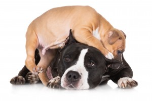 puppy training, things to expose your puppy to