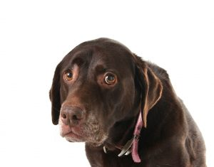 dog training, puppy training, common dog training mistakes