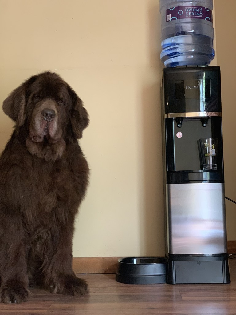 one of the ways we keep our dogs hydrated during the summer months is with fresh, cold water from our Primo Top Loading Water Dispenser with Pet Station