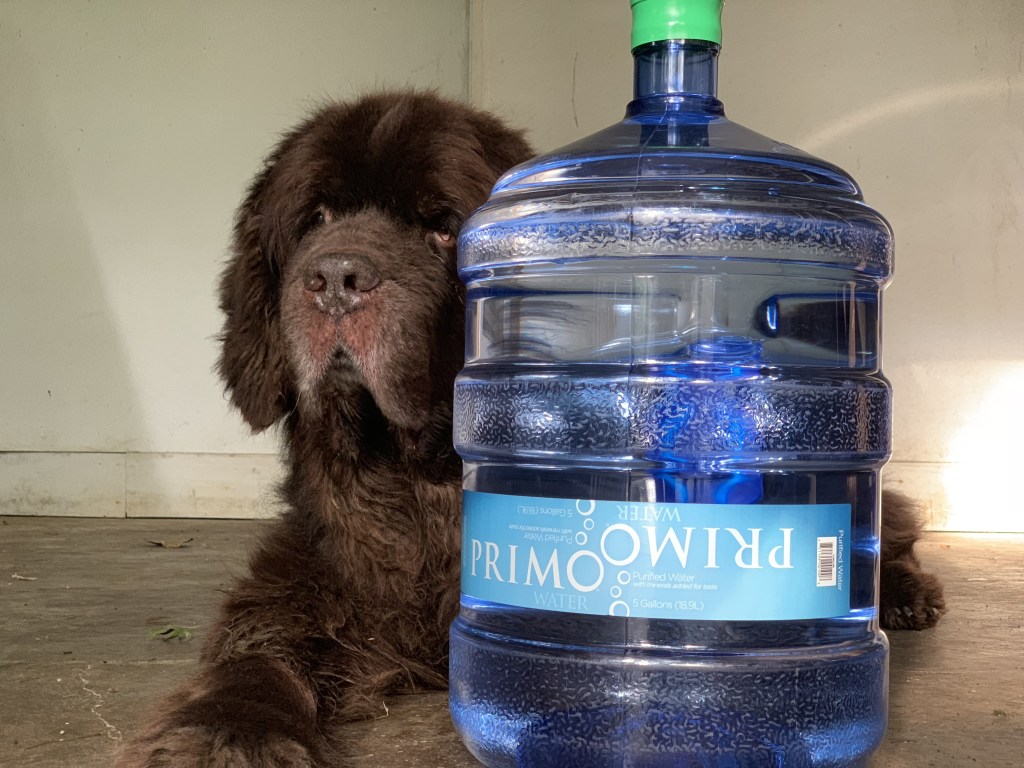4 easy ways to keep dogs hydrated this summer
