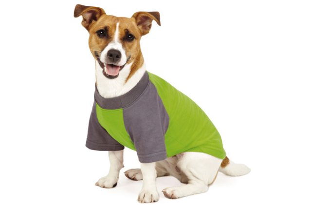Top 10 Mosquito Repellents for Dogs: Insect Shield Premium Tee Insect Repellent