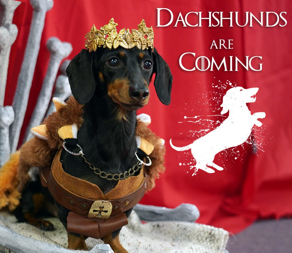 game of bones dachshunds are coming