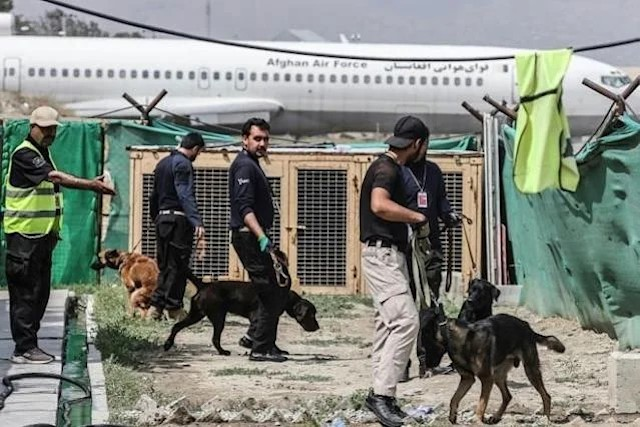 Dogs Training in Kabul