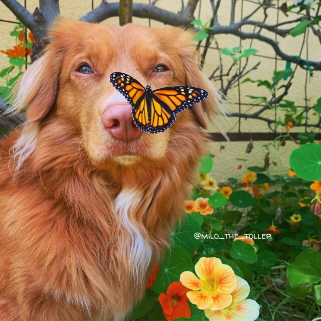 Milo with butterfly